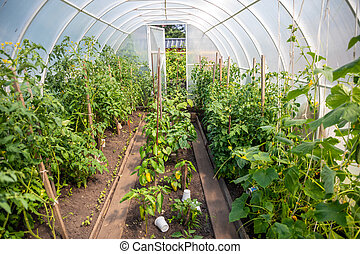 Inside private greenhouse with plants in home garden