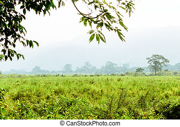 Inside view of Kaziranga National Park Assam India. Perfect...
