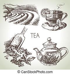 insieme tè, vettore, schizzo, mano, disegnato