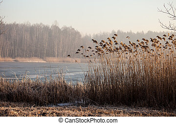 insjö, pogoria., vinter tajma, landskap, in, polen