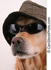 inspecteur, chien