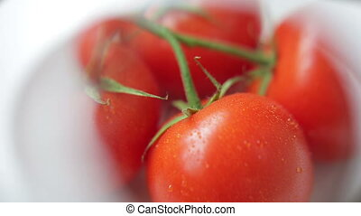 Inspecting Wet Branch of Tomatoes with Magnifying Glass