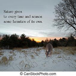 inspirational, citazione, su, natura, vicino, charles dickens, con, uno, solo, doe, guardando, cibo, in, il, prato, a, alba, in, il, winter.