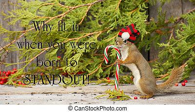 inspirational, presa a terra, suess, individualità, citazione, poco, winter., cappello, orgogliosamente, canna, natale, caramella, dott., il portare, suo, scoiattolo