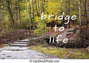 Inspirational quote. Wooden bridge in the park