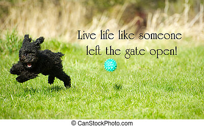"Inspirational words ""Live life like someone left the gate ..."