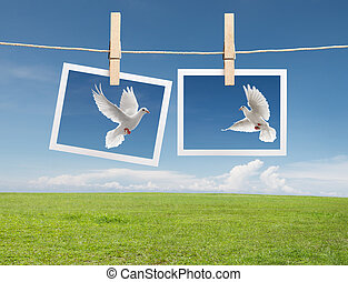 instant photo - two photos of dove hanging on clothesline