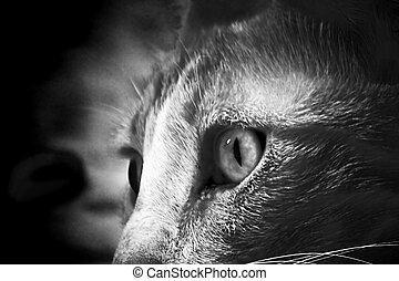 Instinct - Cat eye staring. Black and white. Adobe 1998.