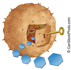 insulin key - Insulin door key cell