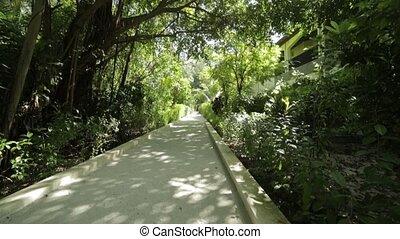 intérieur, lot, plats, walkway, île, maldives