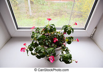 intérieur, windowsill., pot, fleur