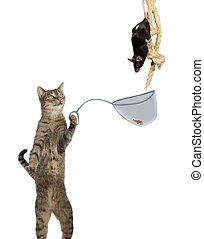 Intelligent cat rat catcher - Fun conceptual image of an...