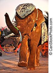 intelligent elephants show - The intelligent elephants show...