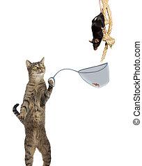 intelligent, katt, råtta, fångar