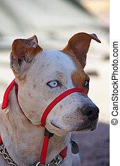 This canine portrait shows his intense focus