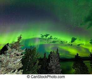 Intense green Aurora borealis over boreal forest - Intense...