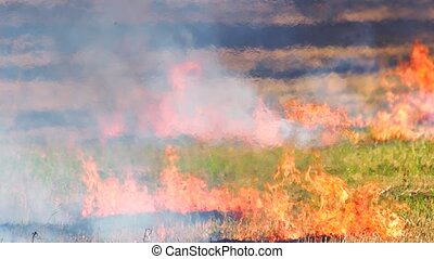 Intense outdoor wildfire in the field. Enviromental crime....