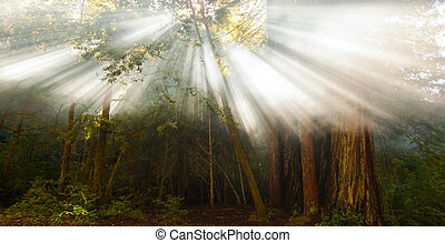 intense sun beams in forest - strong sun rays streaming...