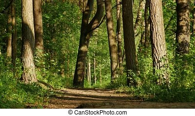 Intensive green leaves of forest. Spring coming into the...