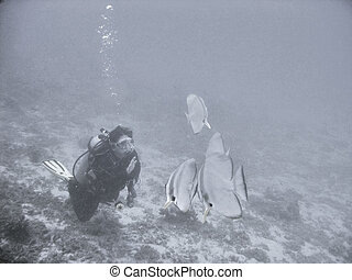 Interaction - A scuba diver greeting a school of friendly...