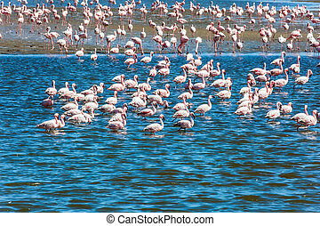 Interesting birdwatching - Ecological, active and photo ...