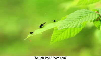 Interesting small flies on the leaves