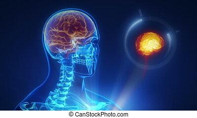 interface, hersenen, technologie, menselijk