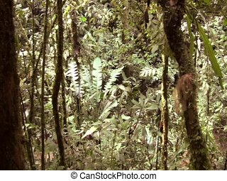 Interior of Amazon rainforest