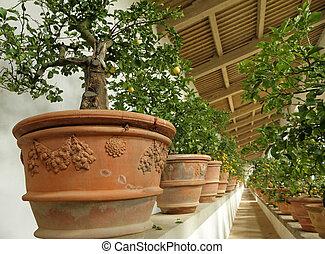 Interior of  Limonaia (Orangery or Winter Garden) in Boboli Gardens, Unesco World Heritage site , Florence, Italy, Europe