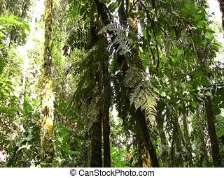 Interior of rainforest with swampy pool - In the Ecuadorian...