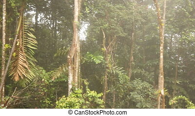 Interior of tropical rainforest on