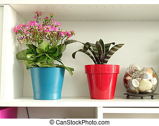 Interior Shelf with Red and Blue Flower Pots