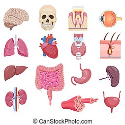 Internal human anatomy organ icon set. Vector illustrations.