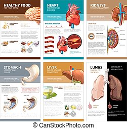 Internal human organs chart diagram infographic. Vector ...