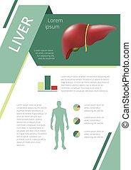 Internal human organs infographic liver - Internal human...