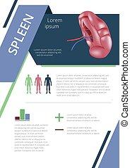Internal human organs infographic spleen - Internal human...