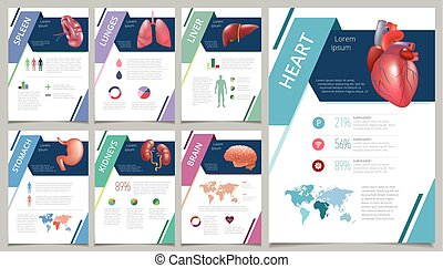 Internal human organs infographic spleen - Internal human...