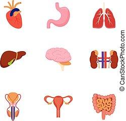 Internal human organs vector illustration.
