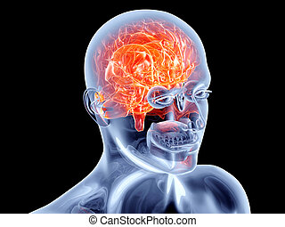 Internal Organs - Brain - The Human Brain. 3D rendered...