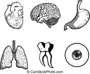 Internal Organs - This is a vector set of human organs in...