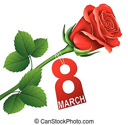 International Women's Day, postcard with red rose. 8 March