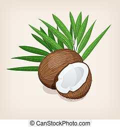 intero, e, mezzo, noce di cocco, con, leaves., vettore, illustration.