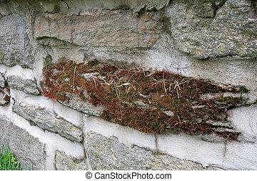 intero, rivestimento di pareti, muschio, pezza, ciottolo, roccia