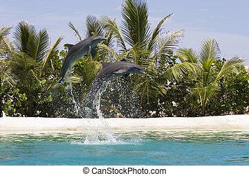 interpretacja, delfiny