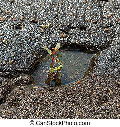 interruzioni, attraverso, pianta, asfalto