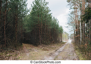 intersection of roads in a forest