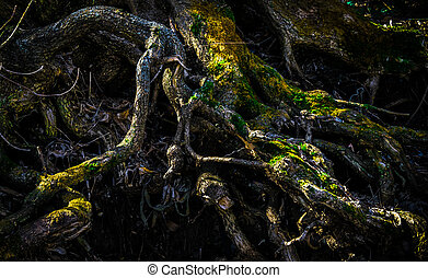 Interweaving of tree roots with moss.