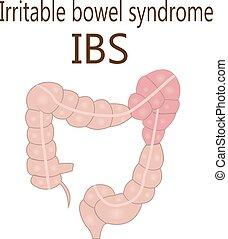 intestin, syndrome, intestin, (ibs), grand, irritable