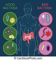 Intestinal flora, Set of good and bad bacteria