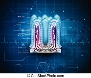 intestinal, villi, bleu, technologie, fond